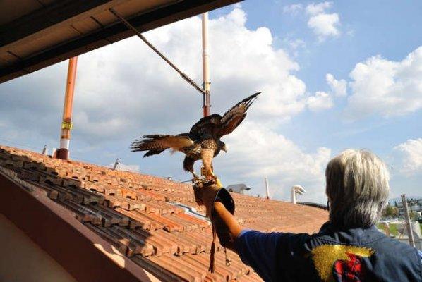 Allontanamento uccelli dal tetto