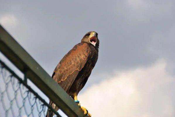 Allontanamento uccelli dalle aree urbane